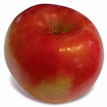 Fuji Apple Identify Apples England Lois Weeks