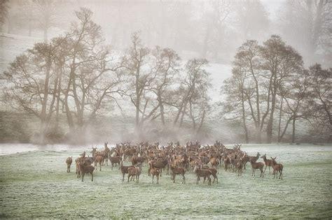 countryside scene    mystery photographer jim