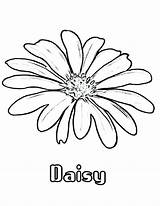 Daisy Coloring Flower Drawing Flowers Colouring Printable Daisies Drawings Simple Draw Getdrawings Colornimbus Stone sketch template