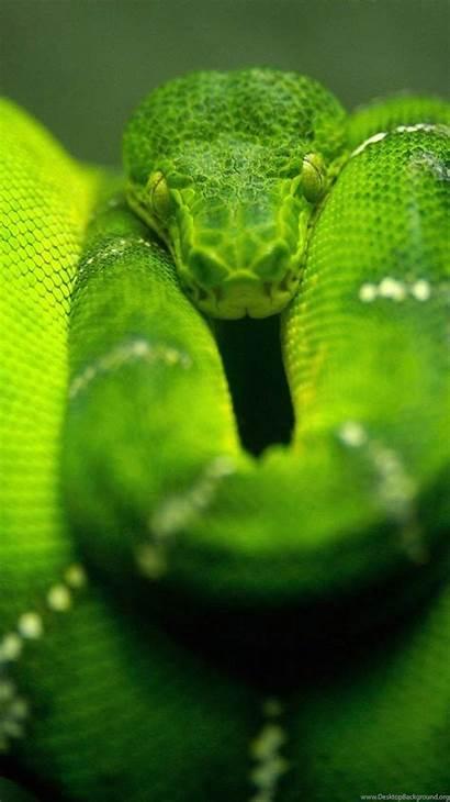 Anaconda Wallpapers Greepx