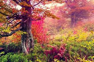 Landscape, Nature, Tree, Forest, Woods, Autumn, Wallpapers