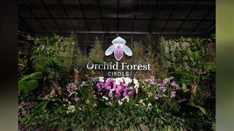 orchid forest cikole wisata bandung  tak sengaja