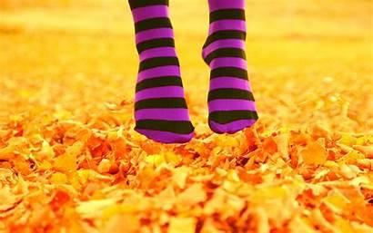 Socks Feet Autumn Leaves Fall Leaf Yellow