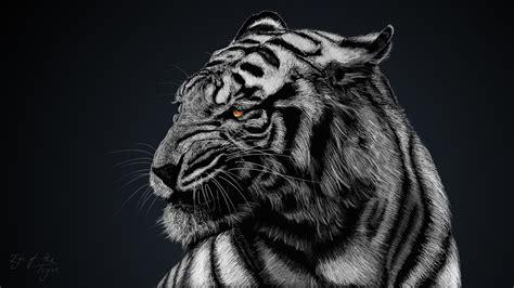 weißer tiger kostüm white tiger wallpaper hd 66 images