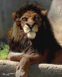 Scar by ellall. I thought it was Kovu at first glance so I ...