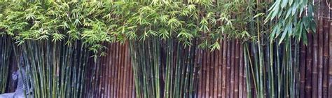 screening bamboo bamboo