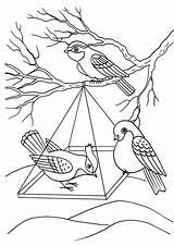 Coloring Birds Feeder Pages Winter sketch template