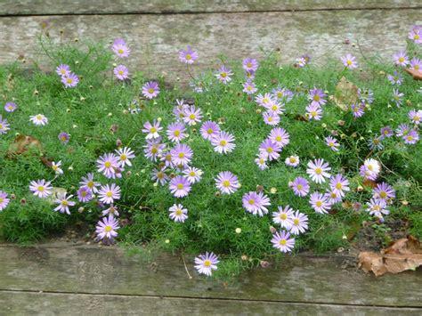 plantes grasses vivaces couvre sol delightful plante grasse couvre sol 3 amazing plantes