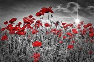 Schwarz Weiß Bilder Mit Rot : pin von melanie viola fotodesign auf photos colorkey ~ A.2002-acura-tl-radio.info Haus und Dekorationen