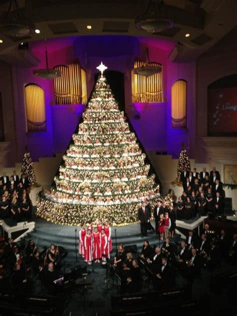 living christmas tree   baptist church