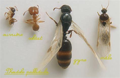moucherons dans la cuisine eliminer les fourmis 01 40 38 02 56 eliminer les fourmis