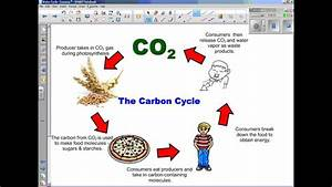 Water Cycle Part 3 Carbon  Oxygen  Nitrogen Cycles