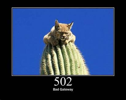 Cat Cats Status Bad Gateway 502 Codes
