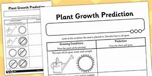 Plant Growth Prediction Worksheet