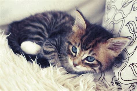 Kaķēni #2 - Spoki