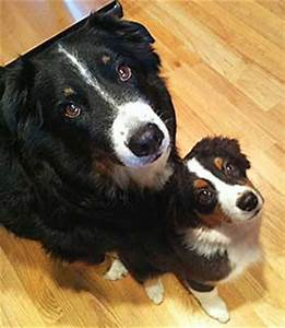 how to introduce a puppy to an older dog With how to introduce a puppy to an older dog