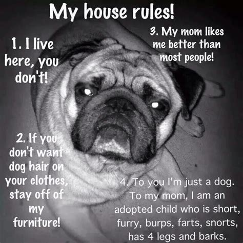 pugs house rules pug dose  deadly cuteness