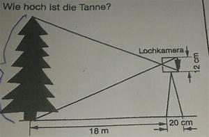 Binomialkoeffizienten Berechnen : wie hoch ist die tanne lochkamera strahlensatz mathelounge ~ Themetempest.com Abrechnung