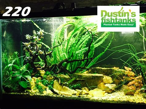 Aquascaping With Rocks by Aquascaping Rocks Dustinsfishtanks