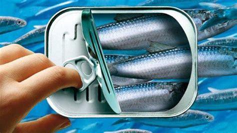 cuisiner les maquereaux les sardines en boîtes fêtent leurs 200 ans