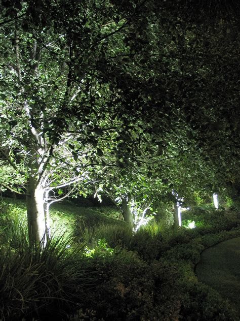 24 cool flood lights on trees pixelmari