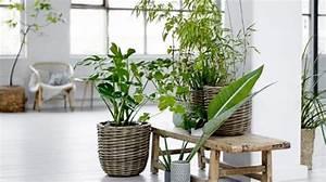 Plante Pour Appartement : un site web accessible sur la d coration nature ~ Zukunftsfamilie.com Idées de Décoration