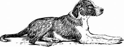 Dog Lying Vector Drawing Stray Portrait Husky