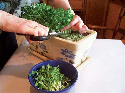 Grow A Year-round Indoor Salad Garden-organic Gardening