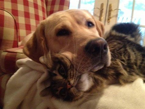 perros graciosos   conocen el espacio personal