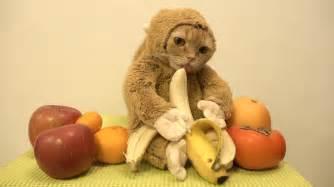monkey cat cat monkey 2016 年の干支 猿になった猫のまる