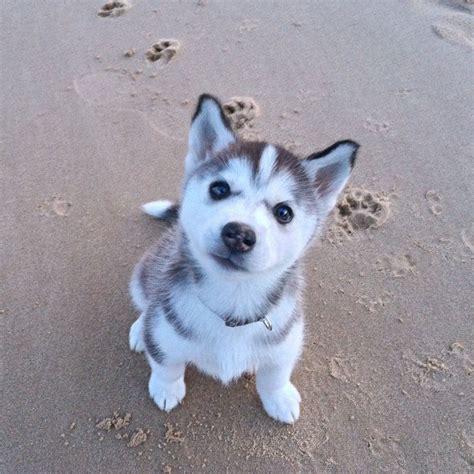 throwbackthursday   beautiful puppy dakota puppy