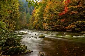Rivers, Forests, Germany, Autumn, Harz, Nature, Wallpapers