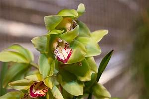 Orchideen Oase Berlin : berlin orchideenfans blog ~ A.2002-acura-tl-radio.info Haus und Dekorationen