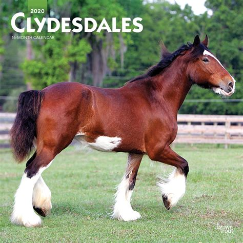 clydesdales monthly square wall calendar animals horses