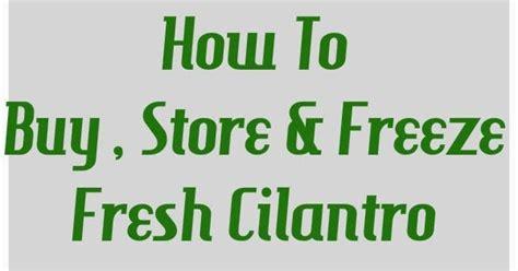 how to freeze fresh cilantro preety s kitchen how to buy store freeze fresh cilantro