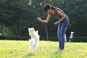 dog training camp the many benefits of dog boot camp With dog training camp