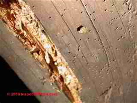 powder post beetles  house borers structural damage