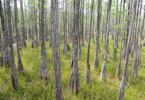 forest florida pine state log waterfalls natural nature visit visitflorida things history