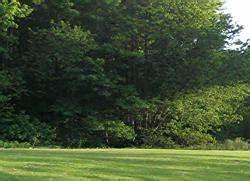 Mulchen Mit Grasschnitt : mulchen hilft dem rasen praxis tipps garten news f r ~ Lizthompson.info Haus und Dekorationen