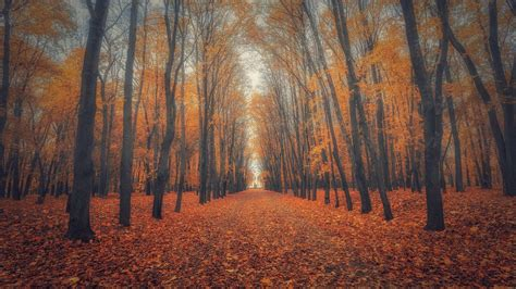 Beautiful Pictures Of Nature Wallpaper by Beautiful Nature Wallpaper Big Size 17 With Autumn Forest