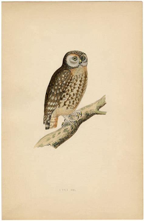 cute vintage owl printable  graphics fairy