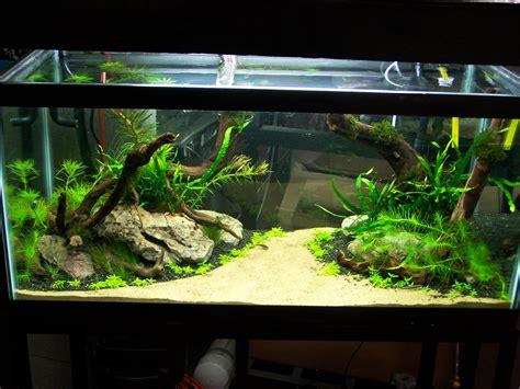 Home Aquarium Design Ideas by Pin By Josh Brown On Aquarium Freshwater Aquarium