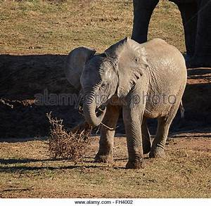 Dead Baby Elephant Stock Photos & Dead Baby Elephant Stock ...