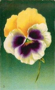 57 Best Pretty Pansies Images On Pinterest