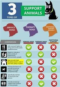 emotional support animal letter san diego california pets With emotional support animal letter san francisco