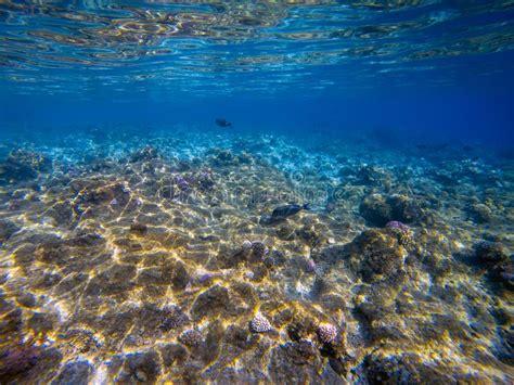 colorful underwater marine life   reef stock image
