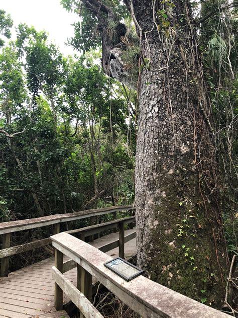 Hammock Trails by Mahogany Hammock Trail Florida Alltrails