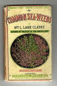 1865 Common Seaweeds Lane Clarke Victorian Pocket Book 147