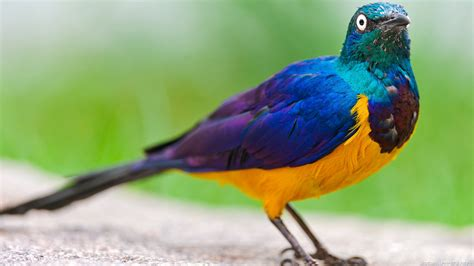 the meaning and symbolism of the word bird