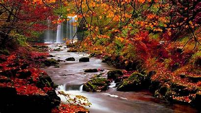 Trees Fall Background Autumn Desktop Leaves Nature